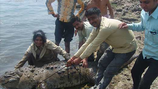Prem Kawar Catching Crocodiles In Her Protected Area Thumbnail